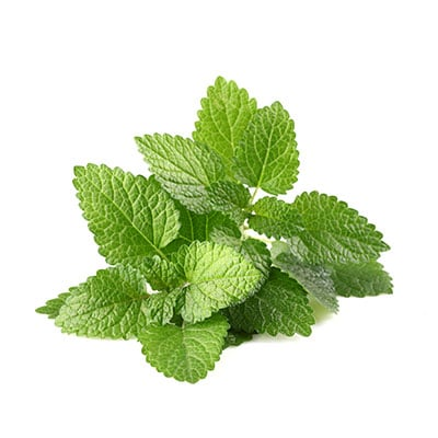 ingredient-mint