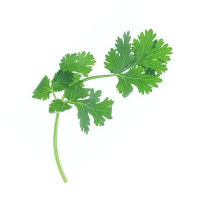 ingredient-parsley