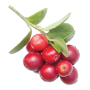 OG_Water_cranraspberry_cranberry_ProductPage-