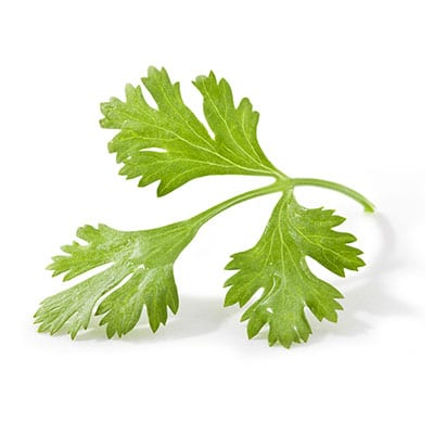 ingredient-cilantro